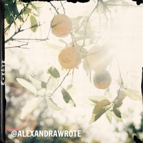 alexandra wrote los angeles sunshine